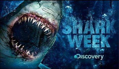 sharkweek-resized-600