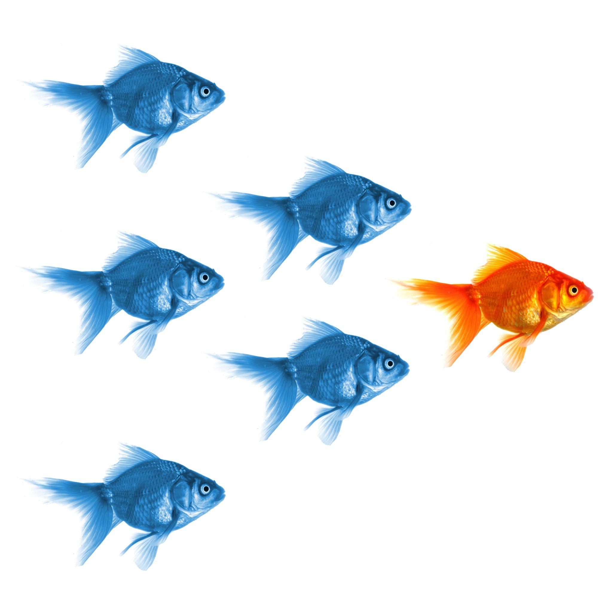 leaderfish